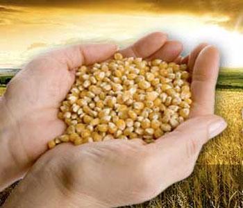 В 2050 году нашу планету ждет голод